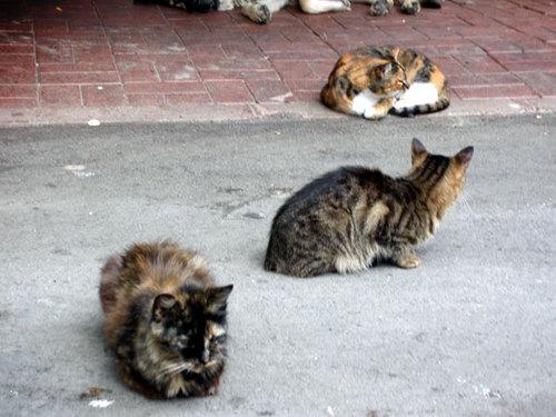 27-4. Street cats