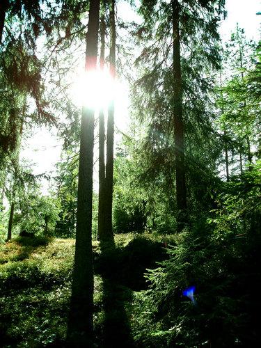 01. Norwegian Woods