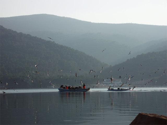 32.seagals_like_boat