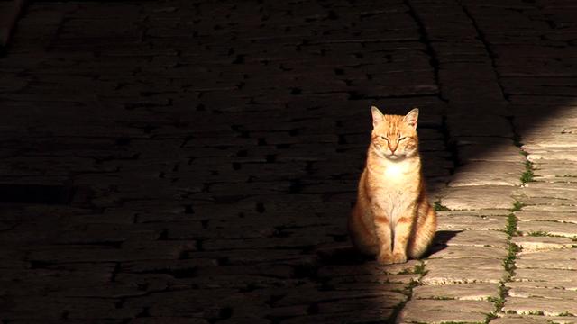 41-3. Street Cat